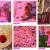 Deel roze T-Mobile Gaypride